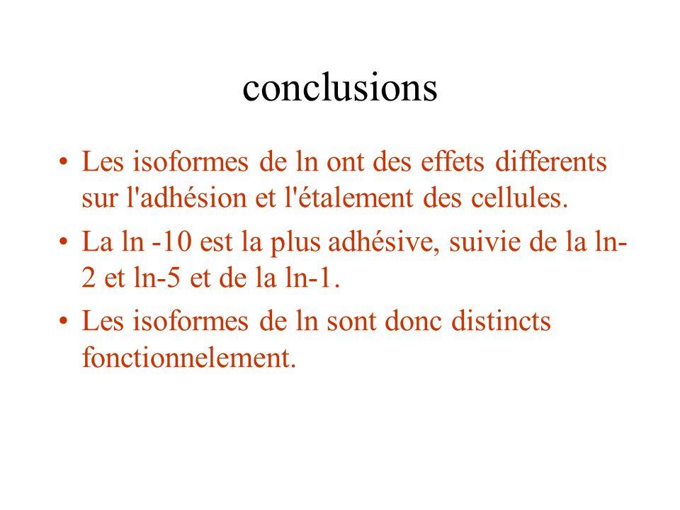 conclusions Les isoformes de ln ont des effets differents sur l adhésion et l étalement des cellules.