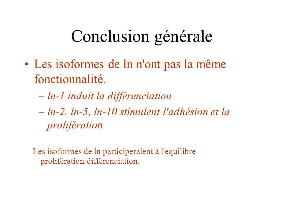 Conclusion générale Les isoformes de ln n ont pas la même fonctionnalité. ln-1 induit la différenciation.