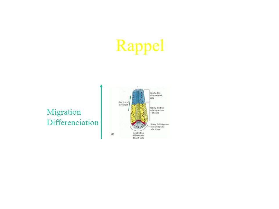 Rappel Migration Differenciation