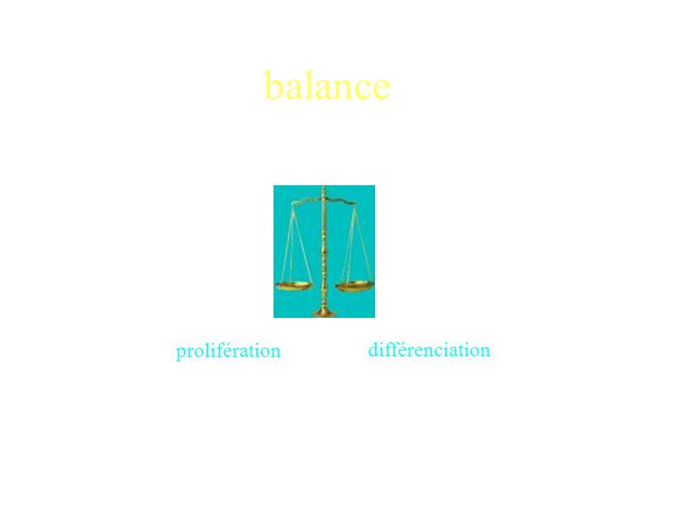balance prolifération différenciation