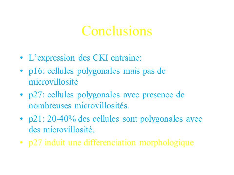 Conclusions L'expression des CKI entraine:
