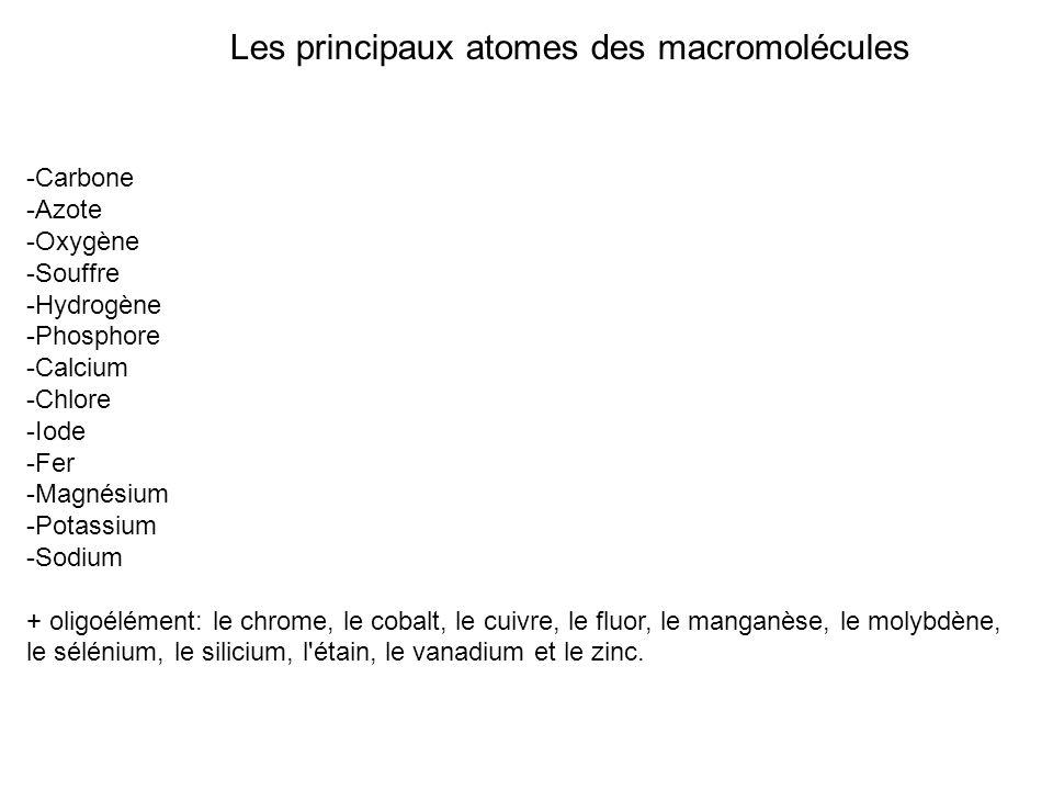 Les principaux atomes des macromolécules