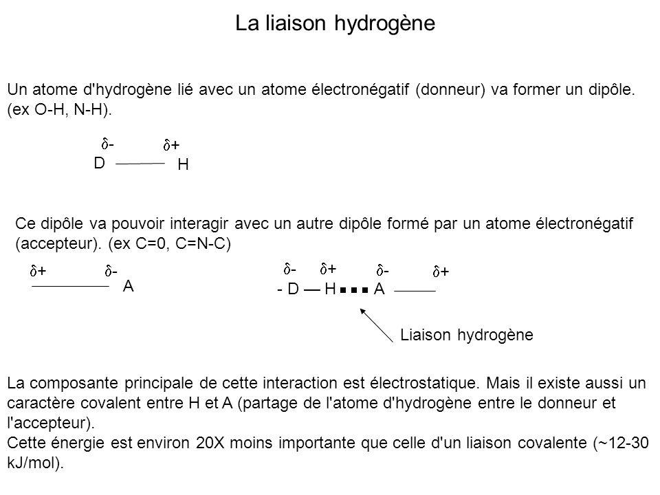 La liaison hydrogène Un atome d hydrogène lié avec un atome électronégatif (donneur) va former un dipôle.