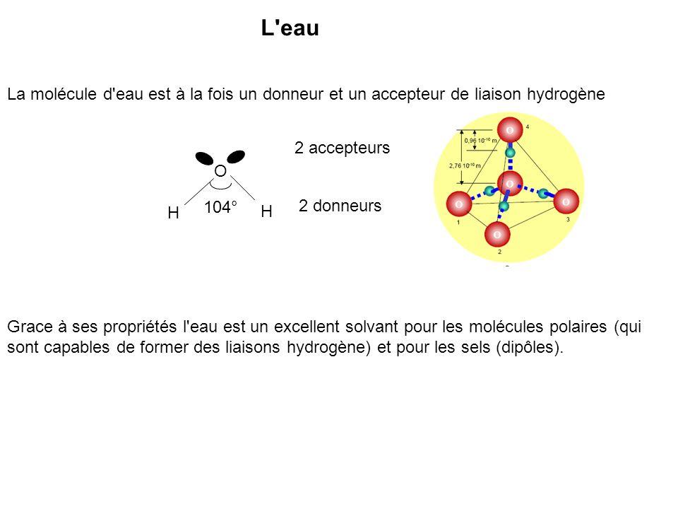 L eauLa molécule d eau est à la fois un donneur et un accepteur de liaison hydrogène. 2 accepteurs.