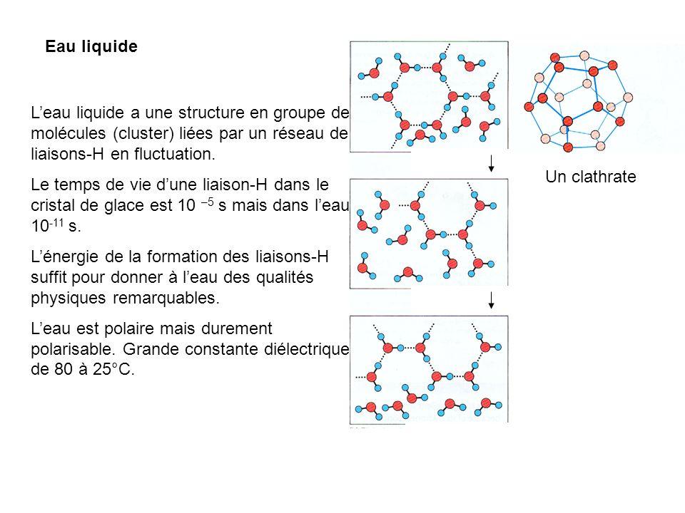 Eau liquideL'eau liquide a une structure en groupe de molécules (cluster) liées par un réseau de liaisons-H en fluctuation.