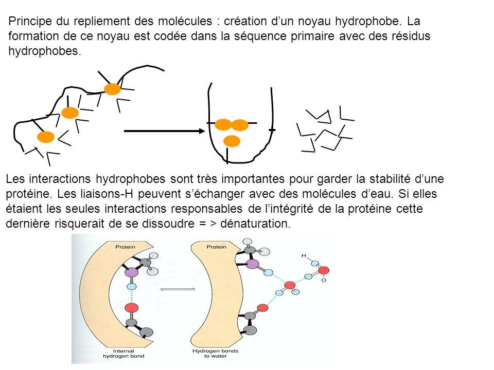 Principe du repliement des molécules : création d'un noyau hydrophobe