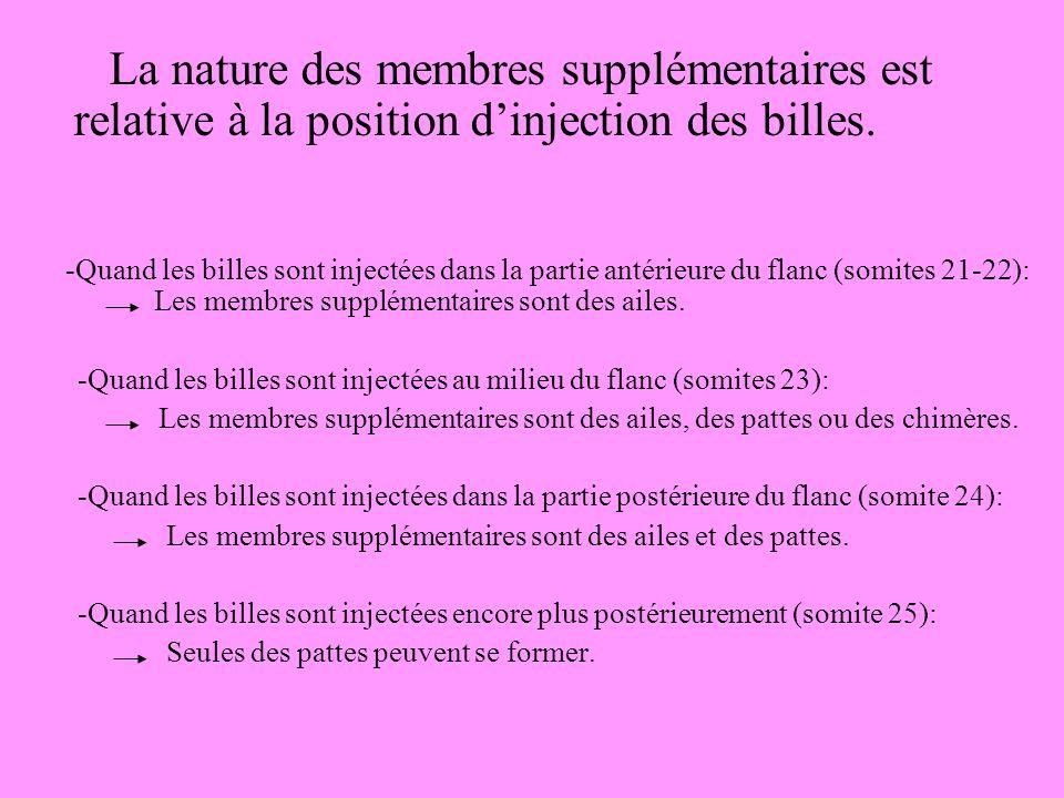 La nature des membres supplémentaires est relative à la position d'injection des billes.