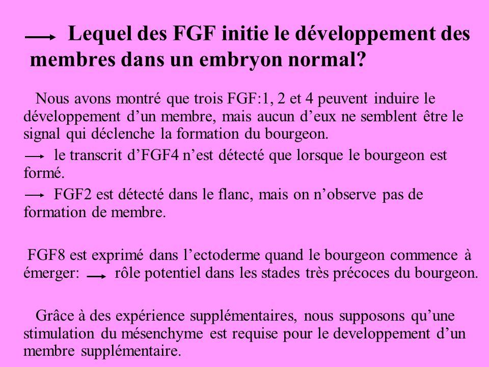 Lequel des FGF initie le développement des membres dans un embryon normal