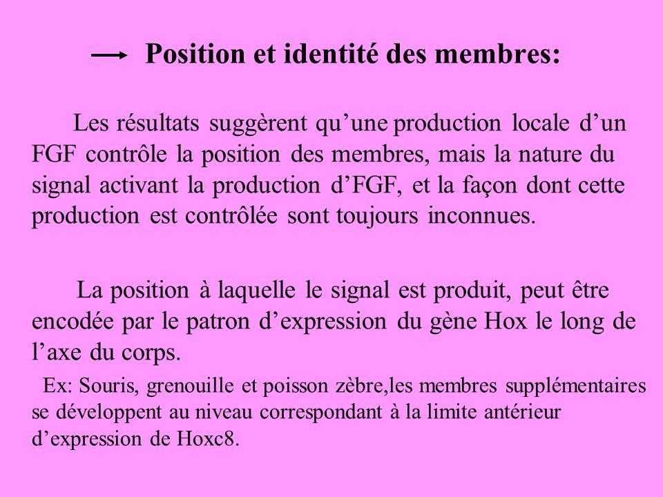Position et identité des membres: