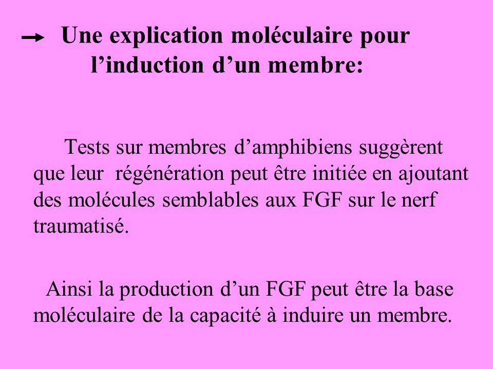 Une explication moléculaire pour l'induction d'un membre: