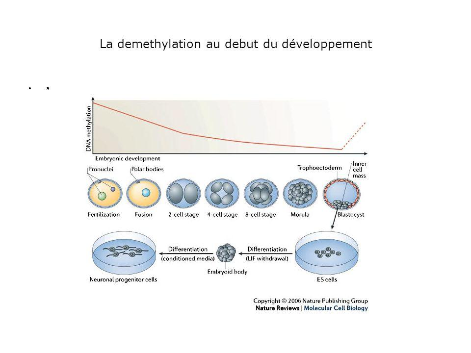La demethylation au debut du développement