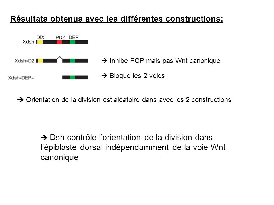 Résultats obtenus avec les différentes constructions:
