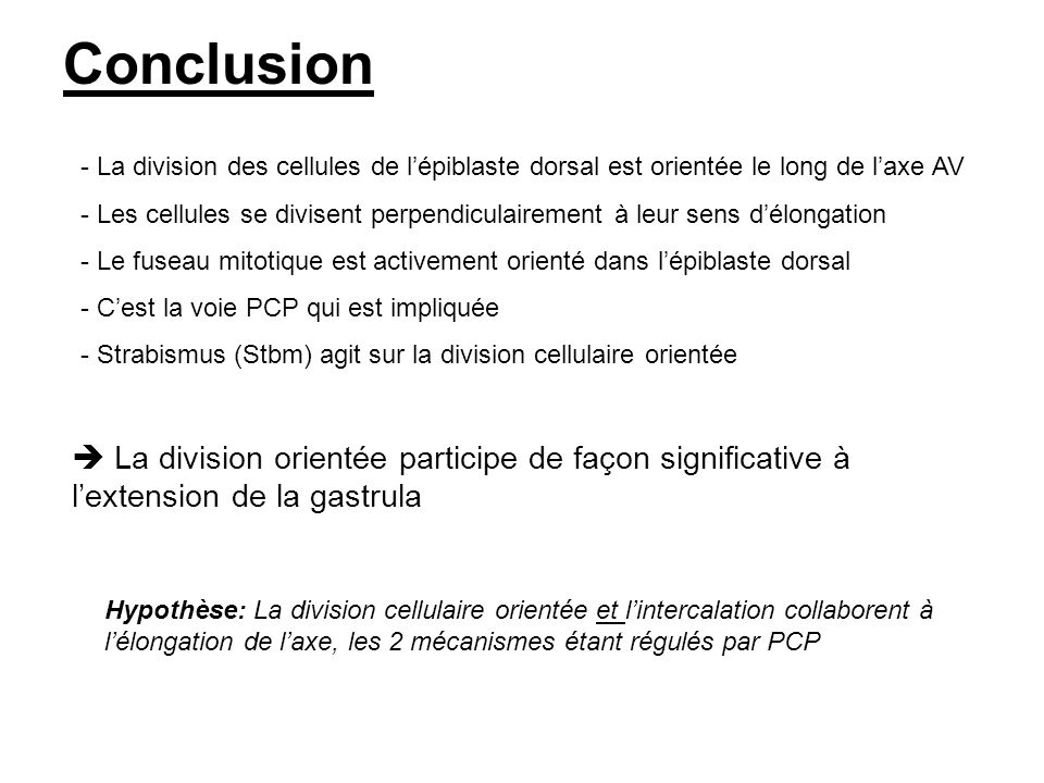 Conclusion La division des cellules de l'épiblaste dorsal est orientée le long de l'axe AV.
