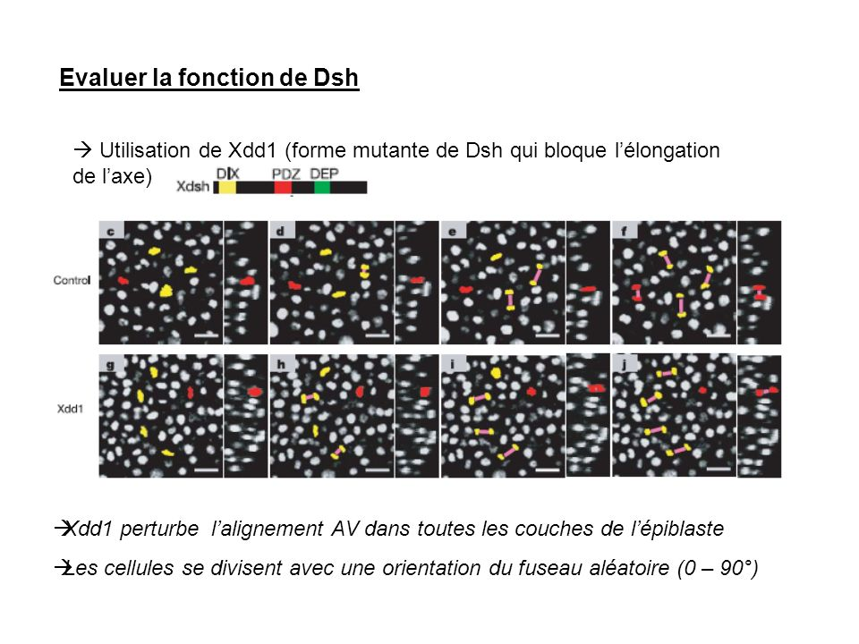 Evaluer la fonction de Dsh