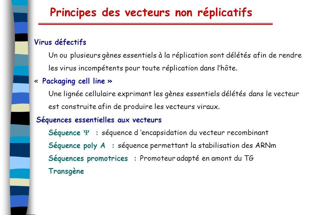 Principes des vecteurs non réplicatifs