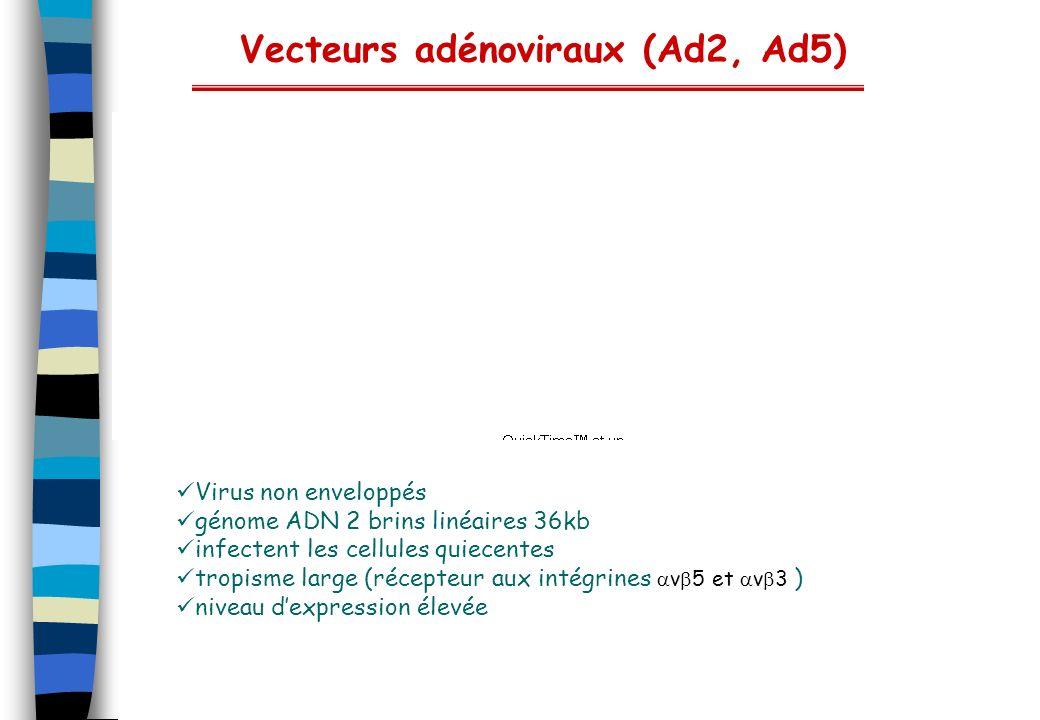 Vecteurs adénoviraux (Ad2, Ad5)