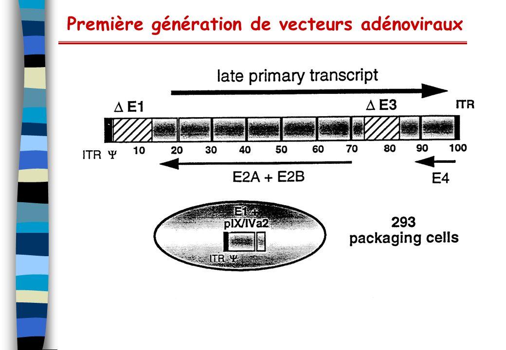 Première génération de vecteurs adénoviraux
