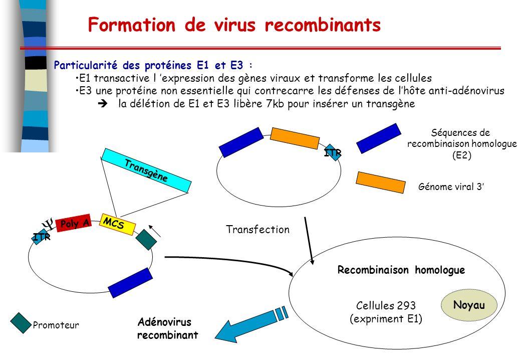 Formation de virus recombinants