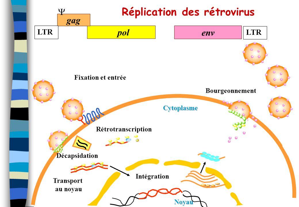Réplication des rétrovirus