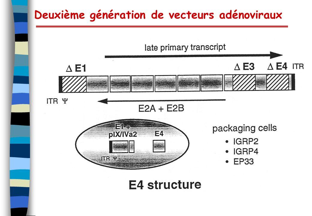 Deuxième génération de vecteurs adénoviraux