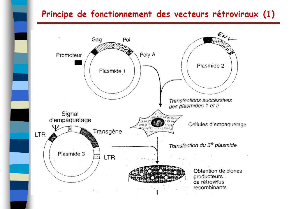Principe de fonctionnement des vecteurs rétroviraux (1)