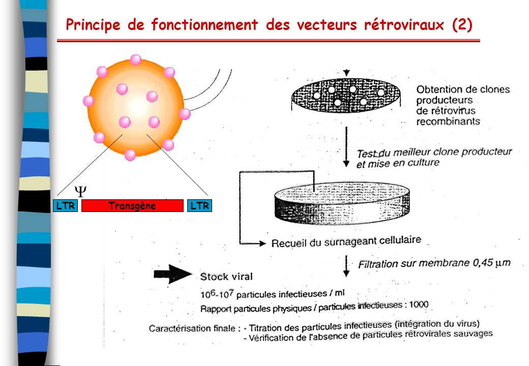 Principe de fonctionnement des vecteurs rétroviraux (2)