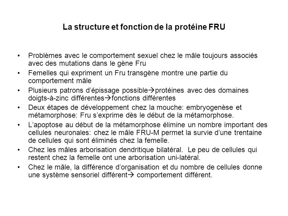 La structure et fonction de la protéine FRU