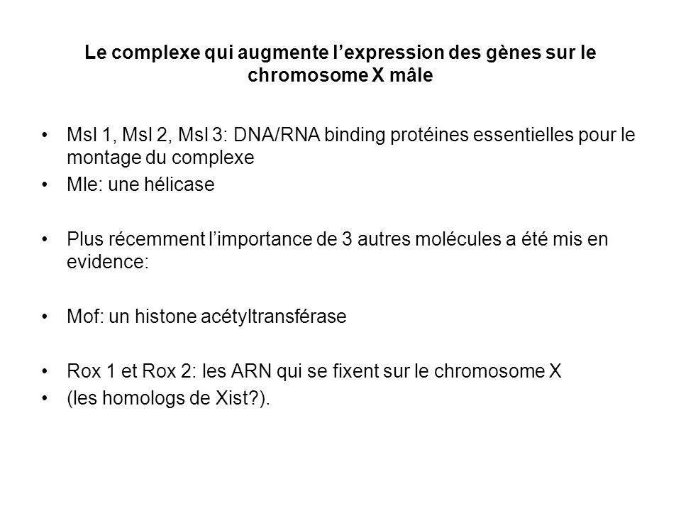 Le complexe qui augmente l'expression des gènes sur le chromosome X mâle