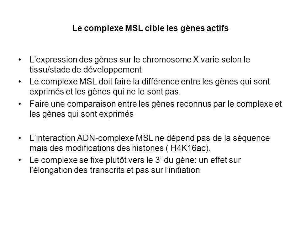 Le complexe MSL cible les gènes actifs