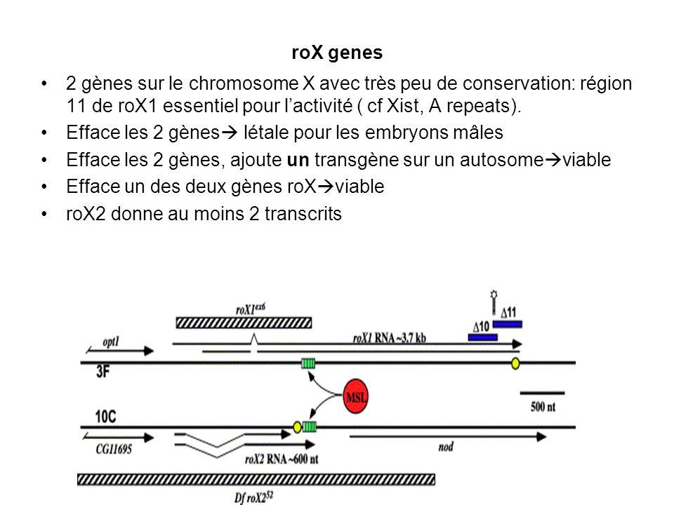 roX genes 2 gènes sur le chromosome X avec très peu de conservation: région 11 de roX1 essentiel pour l'activité ( cf Xist, A repeats).