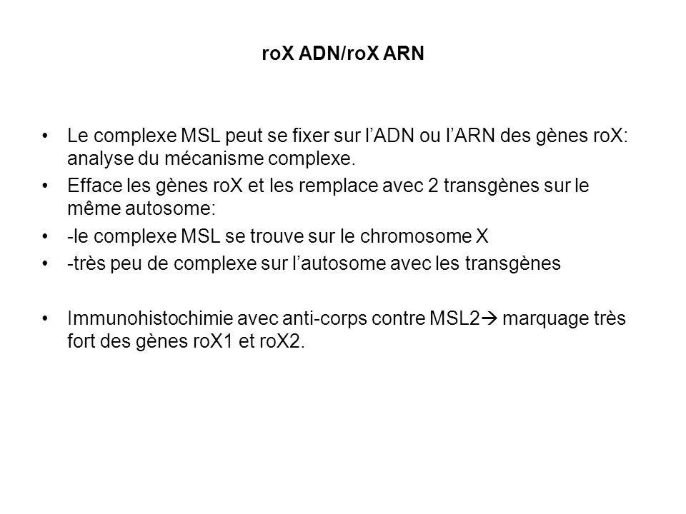 roX ADN/roX ARN Le complexe MSL peut se fixer sur l'ADN ou l'ARN des gènes roX: analyse du mécanisme complexe.