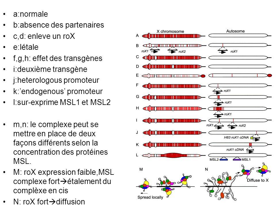 a:normale b:absence des partenaires. c,d: enleve un roX. e:létale. f,g,h: effet des transgènes. i:deuxième transgène.