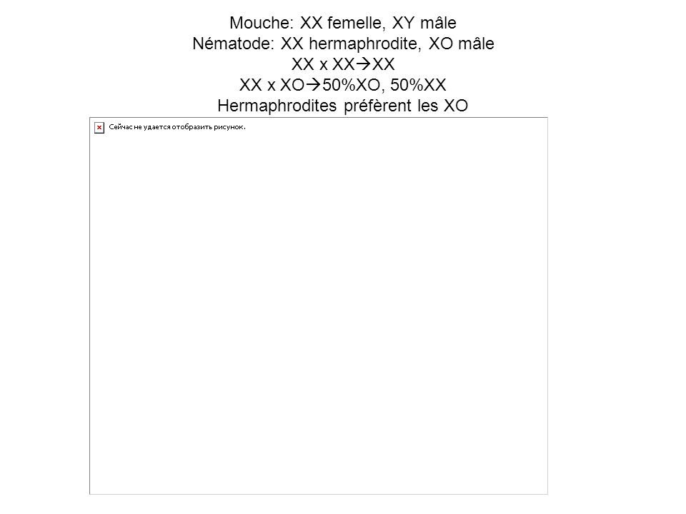Mouche: XX femelle, XY mâle Nématode: XX hermaphrodite, XO mâle XX x XXXX XX x XO50%XO, 50%XX Hermaphrodites préfèrent les XO