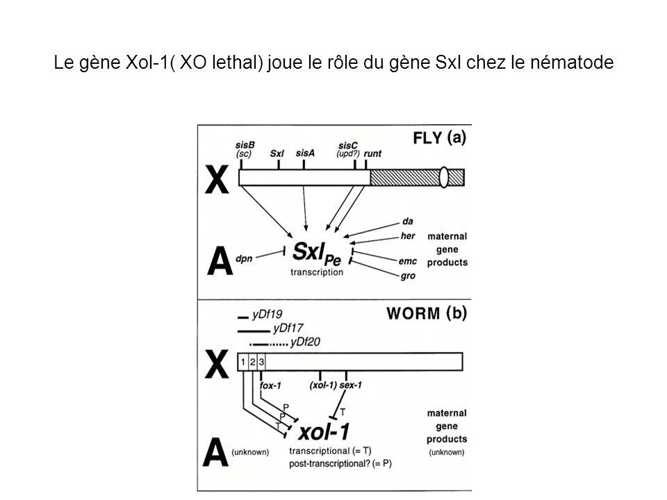 Le gène Xol-1( XO lethal) joue le rôle du gène Sxl chez le nématode