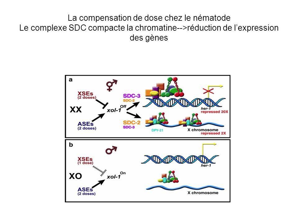 La compensation de dose chez le nématode Le complexe SDC compacte la chromatine-->réduction de l'expression des gènes