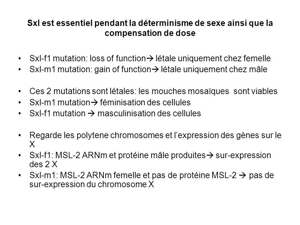 Sxl est essentiel pendant la déterminisme de sexe ainsi que la compensation de dose