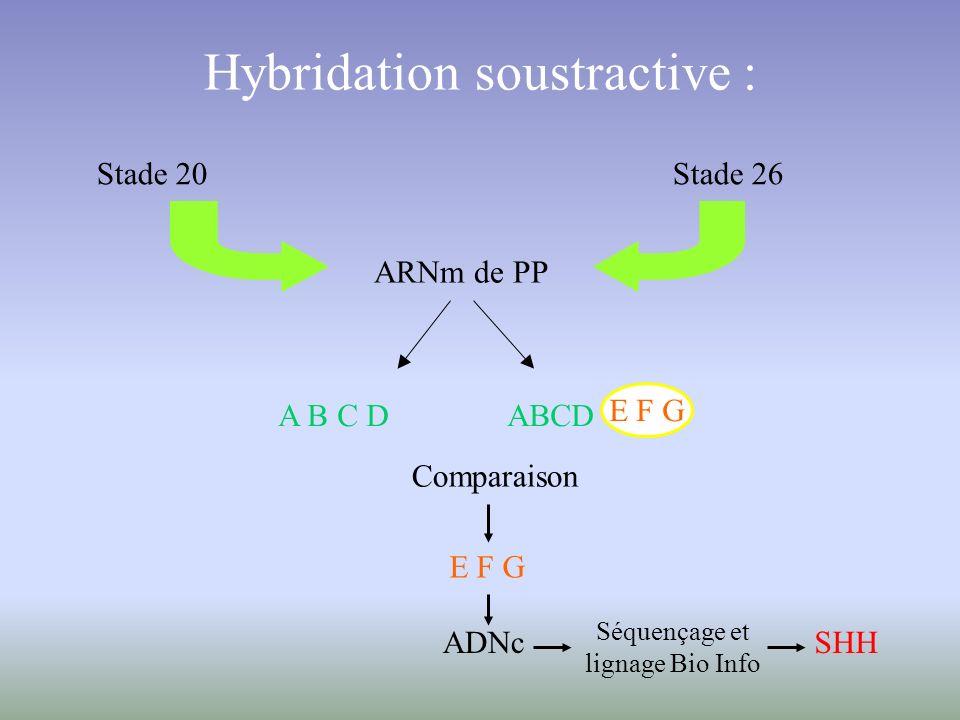 Hybridation soustractive :