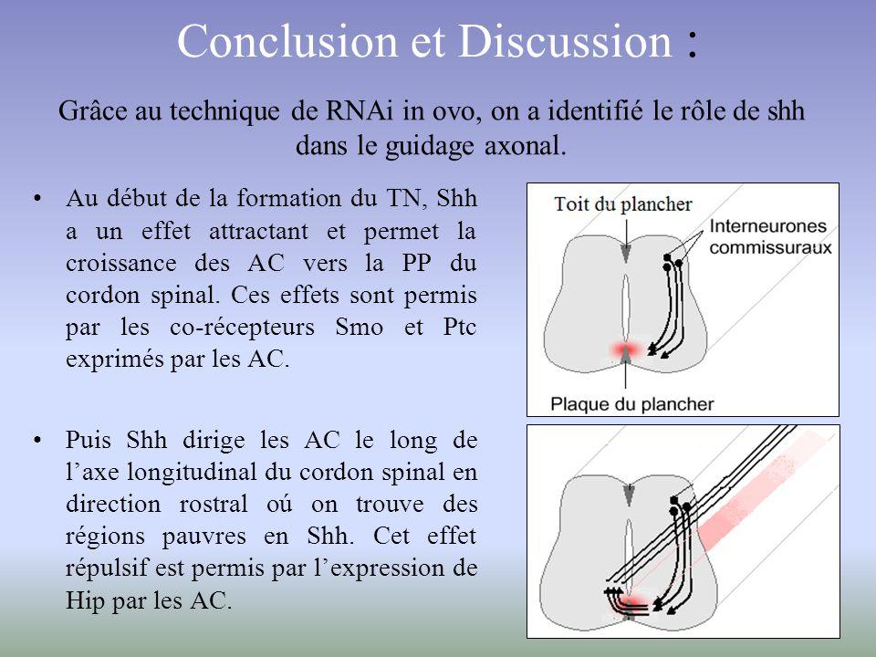 Conclusion et Discussion :