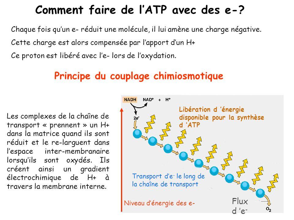 Comment faire de l'ATP avec des e-