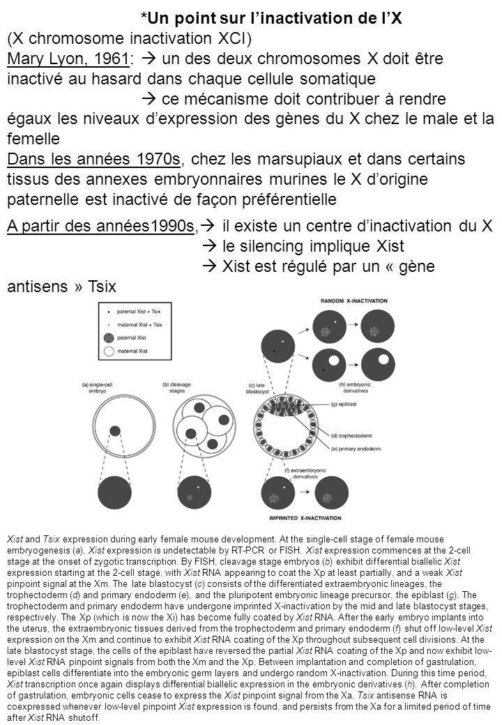 *Un point sur l'inactivation de l'X (X chromosome inactivation XCI)