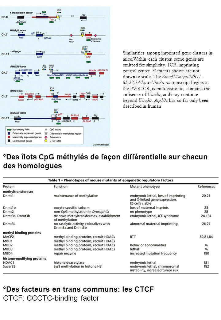 °Des facteurs en trans communs: les CTCF CTCF: CCCTC-binding factor