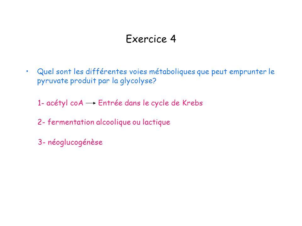 Exercice 4 Quel sont les différentes voies métaboliques que peut emprunter le pyruvate produit par la glycolyse