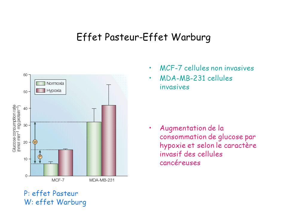 Effet Pasteur-Effet Warburg