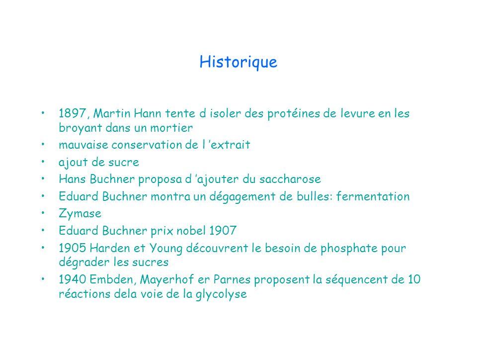 Historique 1897, Martin Hann tente d isoler des protéines de levure en les broyant dans un mortier.