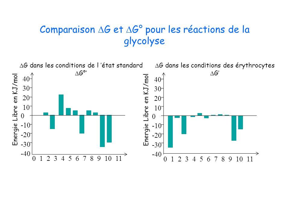 Comparaison DG et DG° pour les réactions de la glycolyse