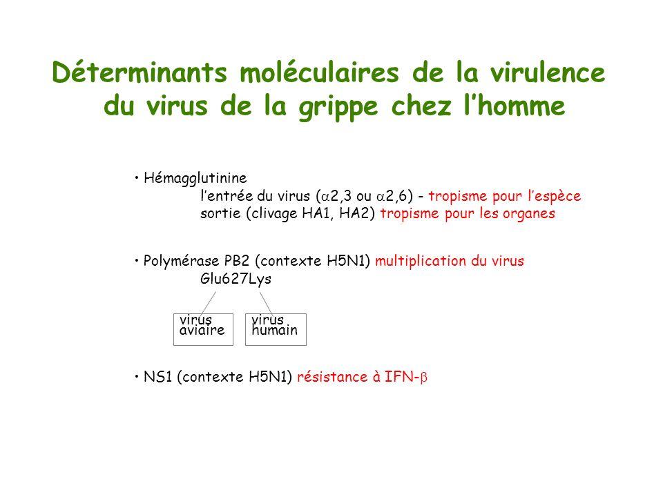 Déterminants moléculaires de la virulence