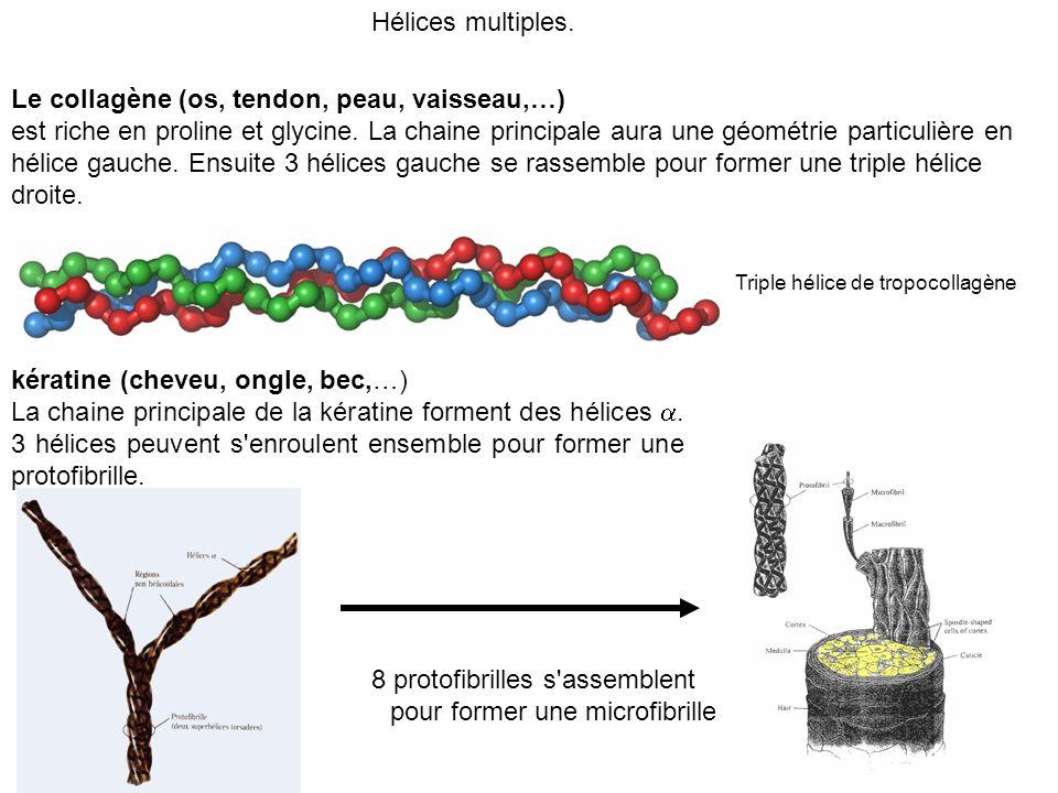 8 protofibrilles s assemblent pour former une microfibrille