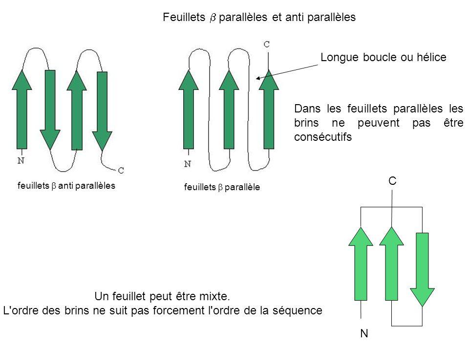 Feuillets b parallèles et anti parallèles