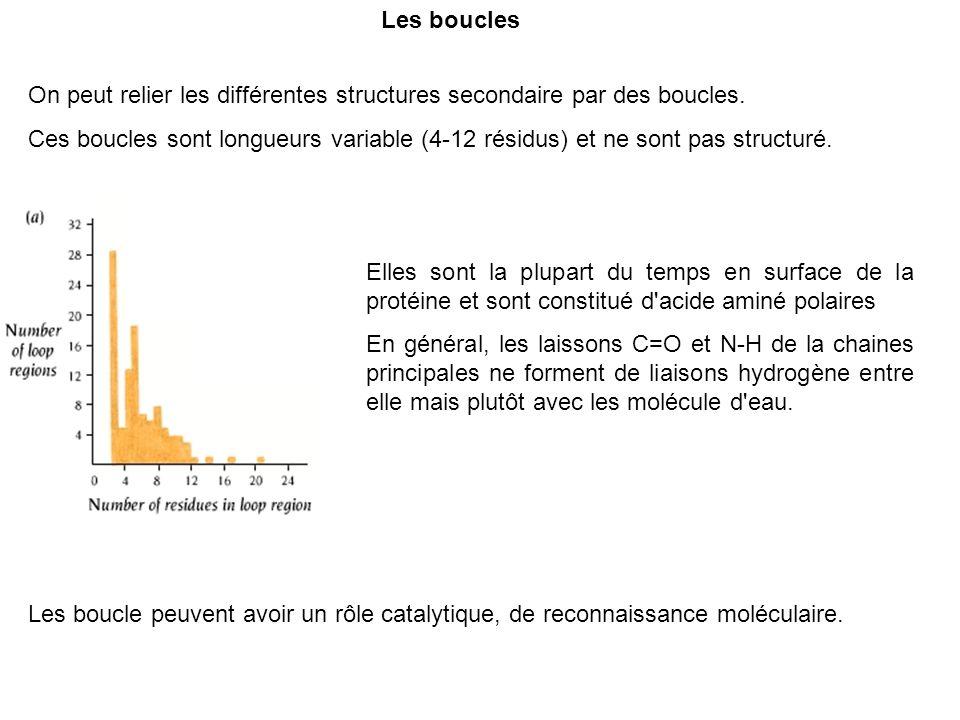 Les bouclesOn peut relier les différentes structures secondaire par des boucles.