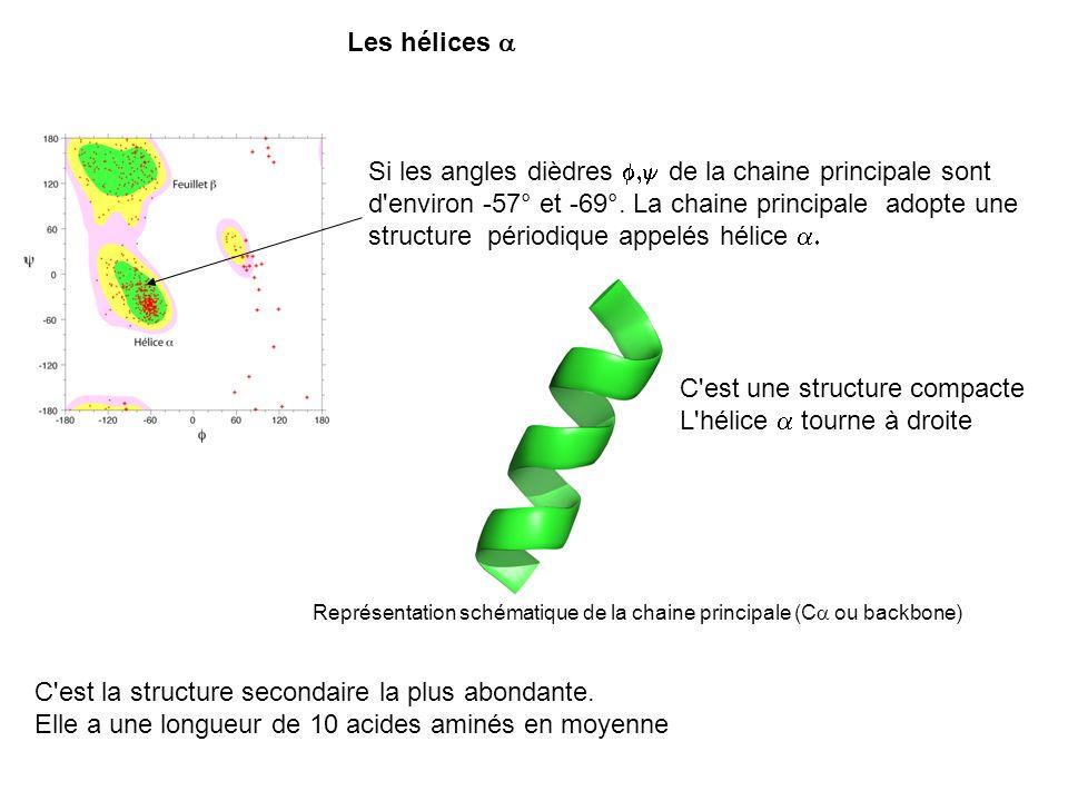 C est une structure compacte L hélice a tourne à droite